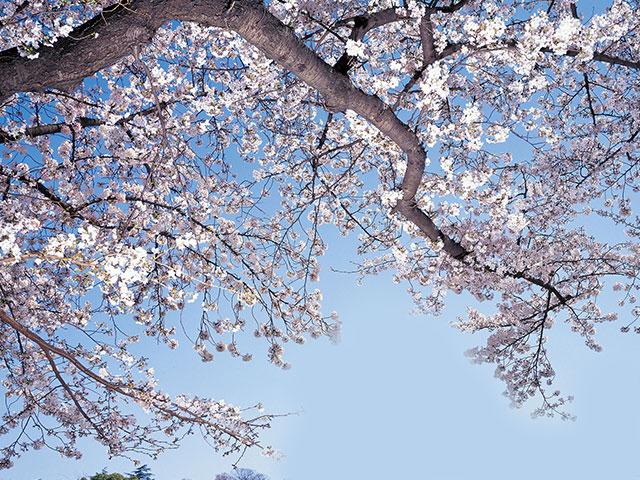 日本の四季を体験